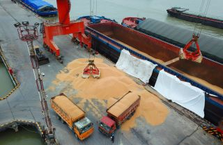 Trucks laden with imported soybeans prepare to depart a port in eastern China in April 2018.