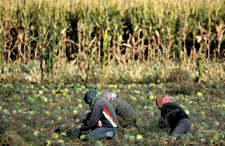 Chinese Farmers' Calls for Change Go Unanswered
