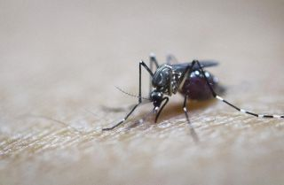 Stopping Mosquito-Borne Disease at the Source