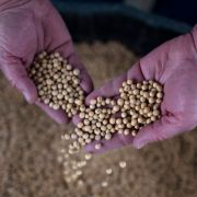 A U.S. farmer in Nebraska holds soybeans from a recent harvest on May 5, 2019.