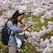 A mother takes photos with her baby under cherry blossoms in full bloom in Tokyo, Japan, on March 29, 2015.